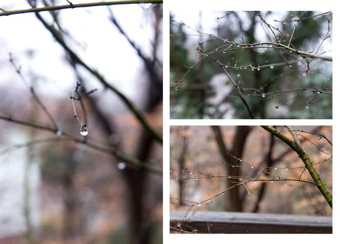 nature photo collage