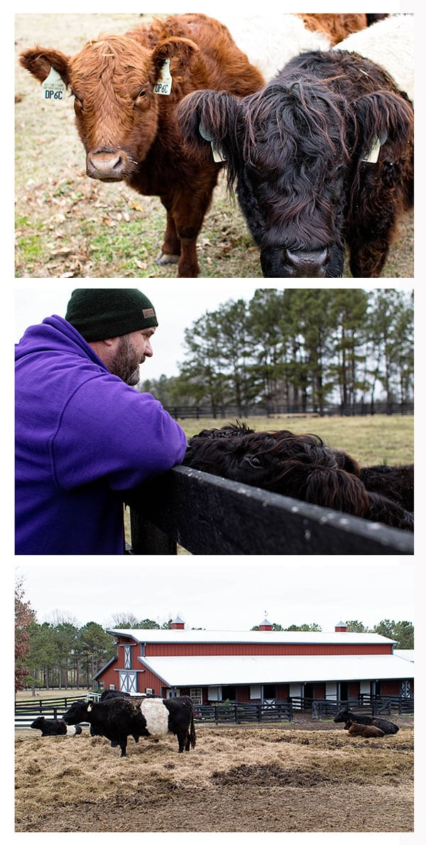 Photo 1: Two cows Photo 2: Farmer Ray looking at cows in a field Photo 3: Cows in a large pen with a red barn in the background